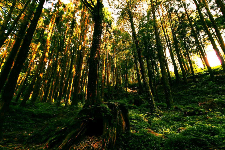 台灣檜木香