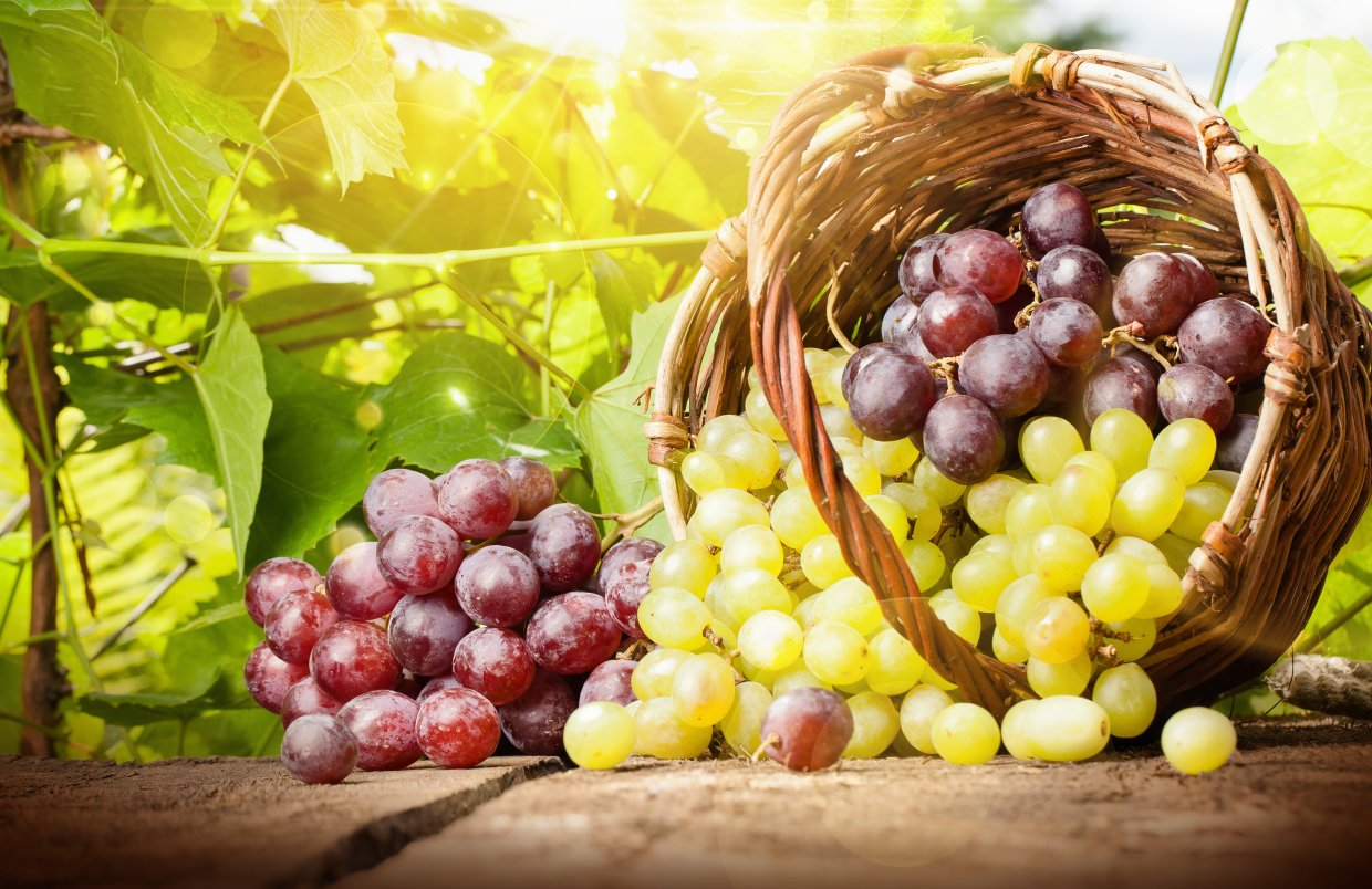 Grapes,In,A,Basket,On,A,Background,Of,Grape,Leaves