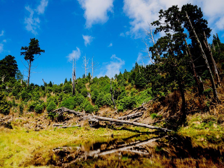 看到充滿枯木的小池,就知道看到「偉蛋池」也來到最後一段路了