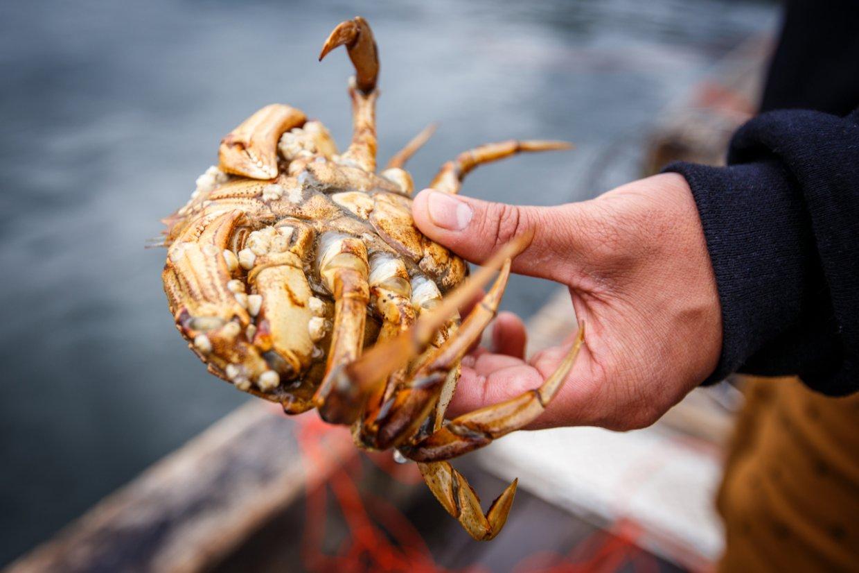 挑選螃蟹秘訣4