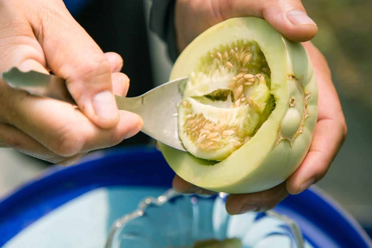 吃完會微笑的美濃瓜!嘉義溫室直立栽培,「微笑田園」美濃瓜