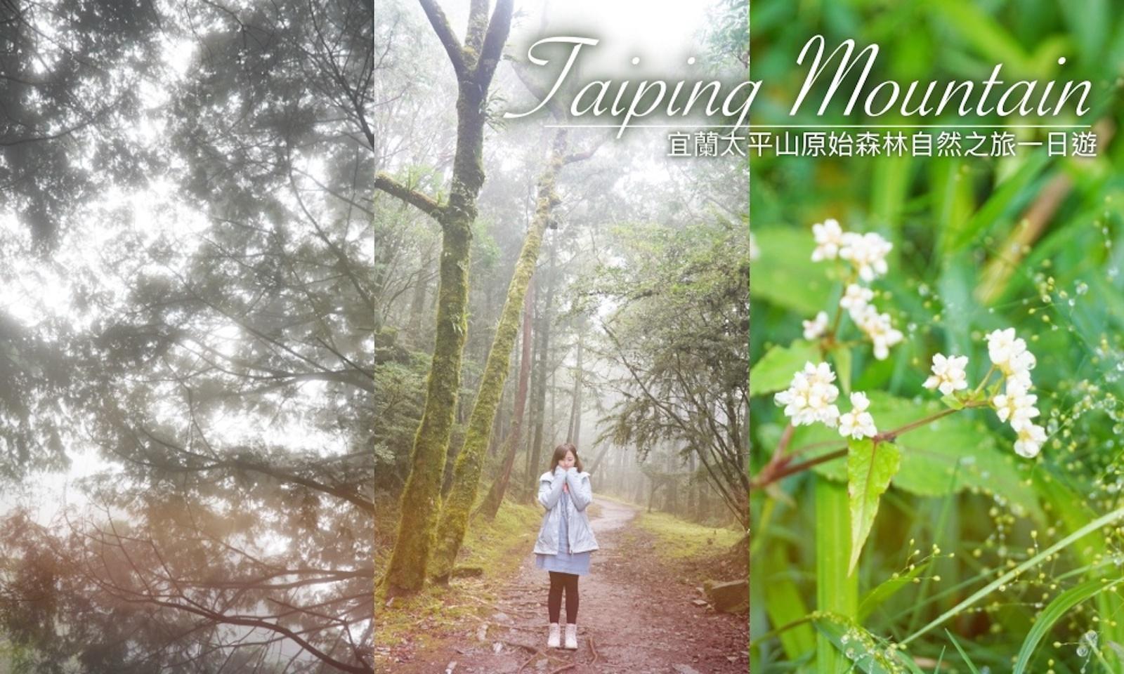 宜蘭太平山一日遊心得|太平山森林步道森呼吸,原始森林一日遊