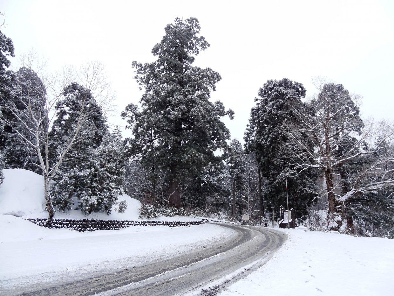 冬季的美女平神木群樣貌