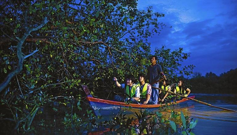 船遊紅樹林觀繁星般螢火蟲奇觀