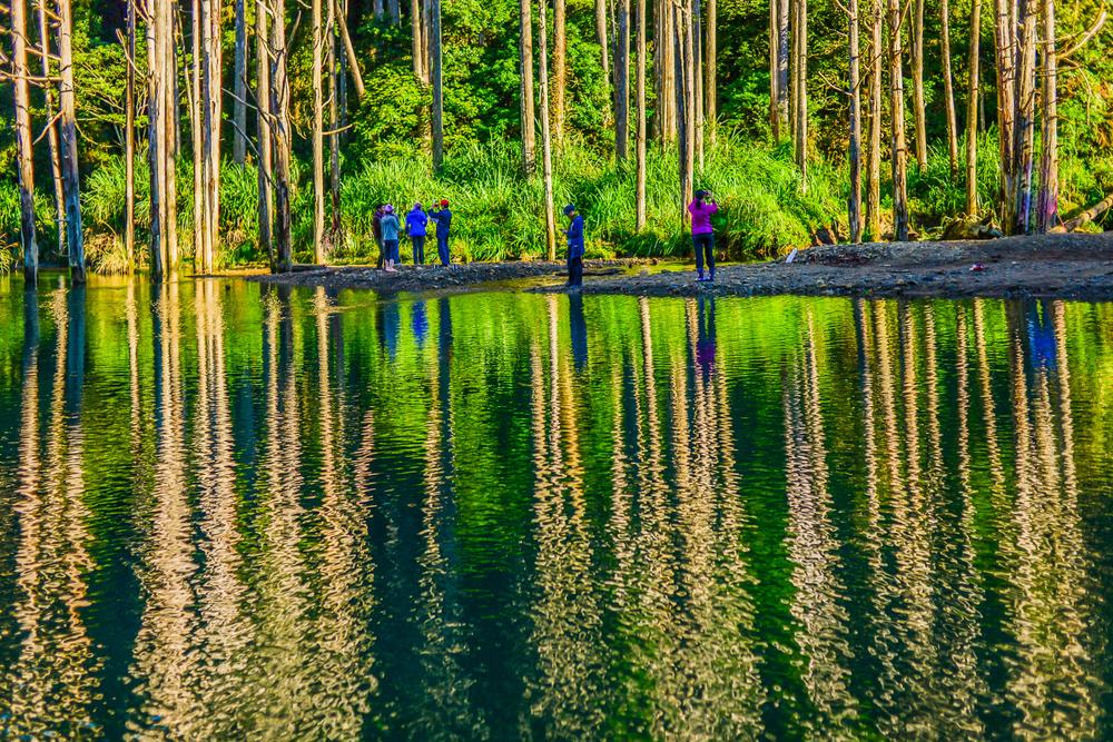 水漾森林最著名的濕地倒影