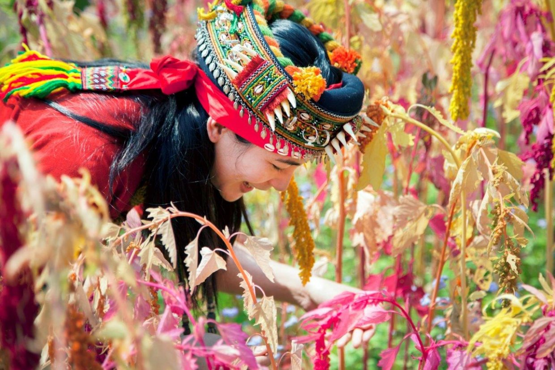 來台東賞紅藜!最詳細台東紅藜地圖看這篇 大自然最美的紅藜地毯