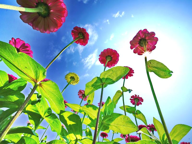 假日放風賞花去 新北大都會公園多處花海盛開