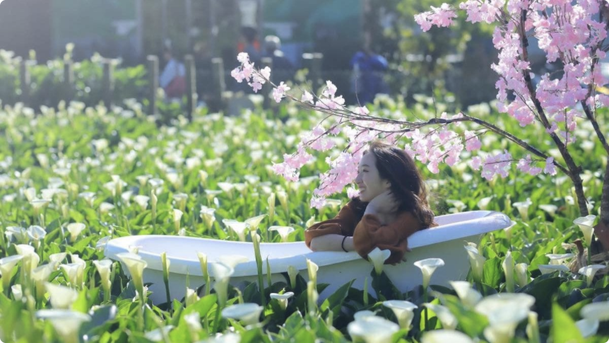 2020 陽明山海芋季開跑囉!竹子湖怎麼去 & 推薦餐廳景點一次告訴你