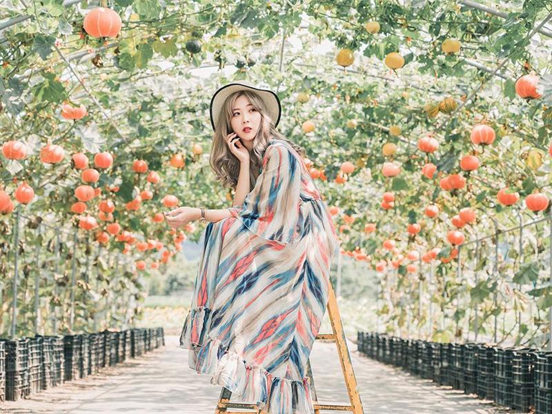 后里中社花市不只有彩色花毯!季節限定南瓜節,必拍南瓜隧道