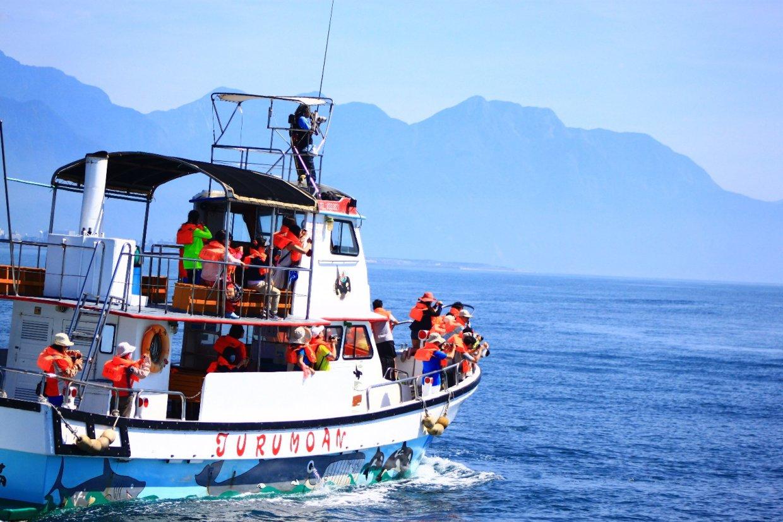 賞鯨趁現在!台灣四大賞鯨地點 避開人潮到宜花東海上賞鯨趣