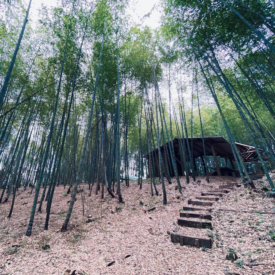 嘉義8條必走森林登山步道秘境|踏遍嘉義登山步道享受森林浴