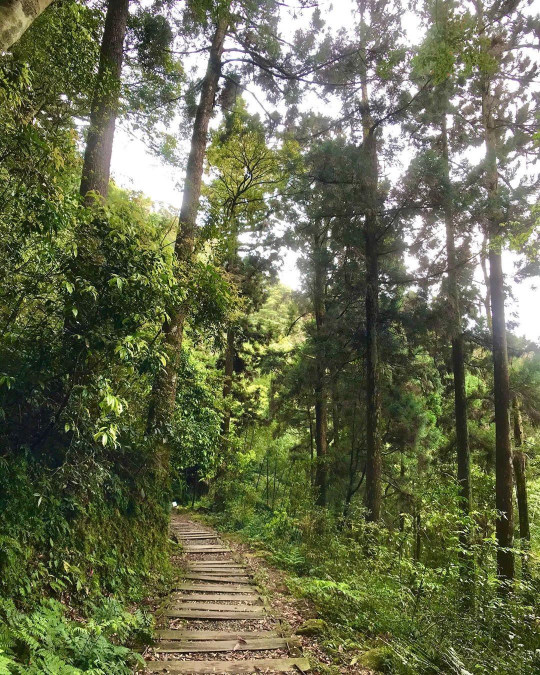 精選8條嘉義登山步道秘境|踏遍嘉義登山步道享受鳥鳴芬多精