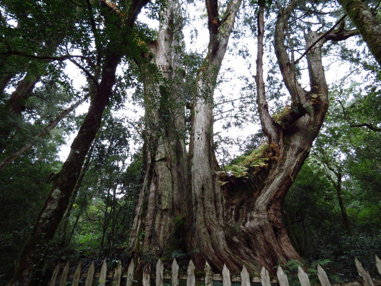 不只司馬庫斯!精選新竹8條登山步道,探索罕為人知的古道秘境