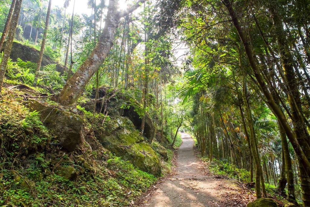 除了美食還能這樣玩!8條台南郊山森林步道帶你玩一樣的台南