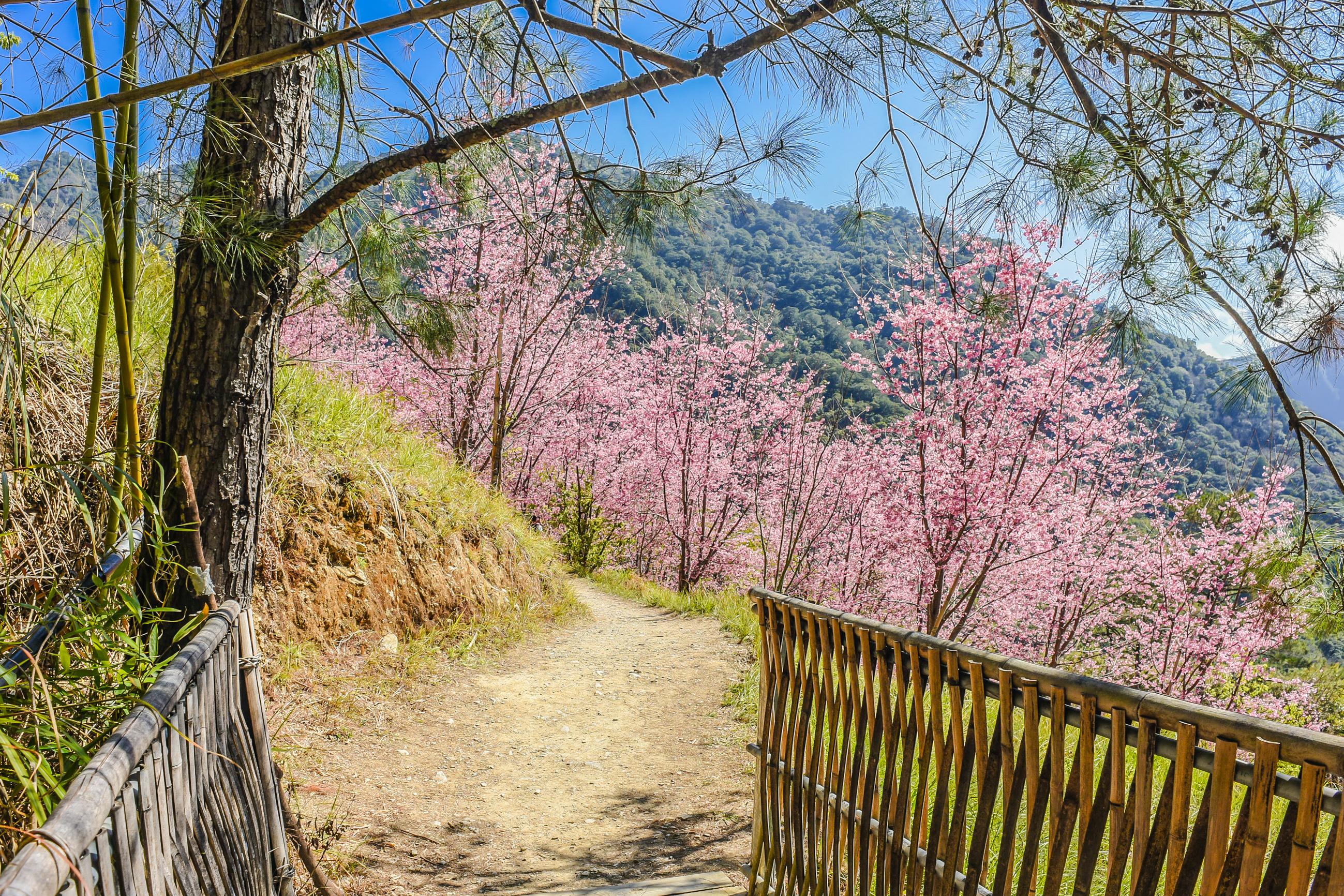 不只有司馬庫斯!精選新竹Top8登山步道,一起享受森林浴