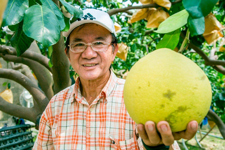 柚子品種指南