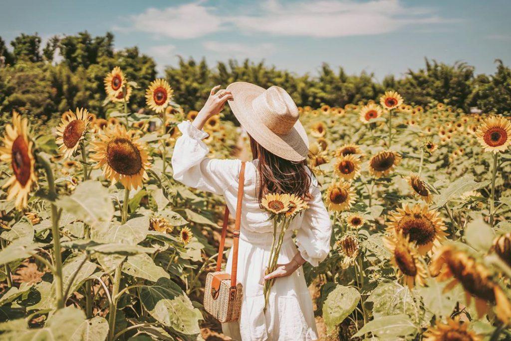 十月向日葵花季!全台向日葵花海推薦 帶你迎向燦爛陽光