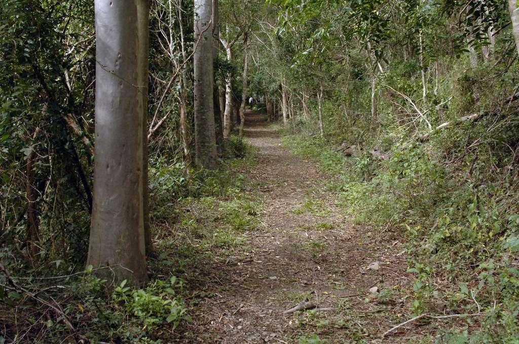台東山林森呼吸 走入台東私房登山步道Top8 感受清新大自然