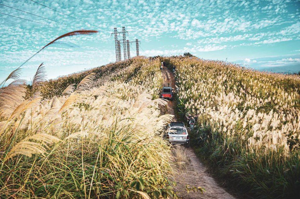 2020全台芒草季景點懶人包|拍出仙氣網美照就去這幾個景點