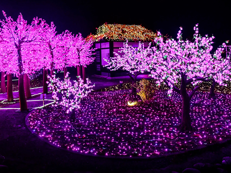 眼晴又戀愛了!「四重溪溫泉季」超美浪漫粉紅燈海準備盛開!