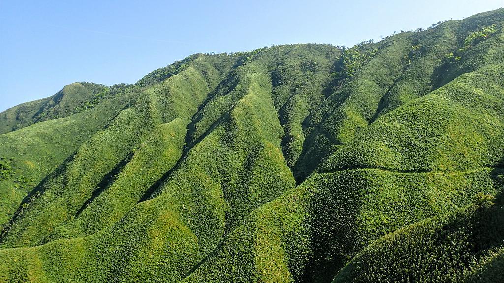 台灣中級山路線推薦:來去看綠油油抹茶山!想要挑戰中級山看這篇
