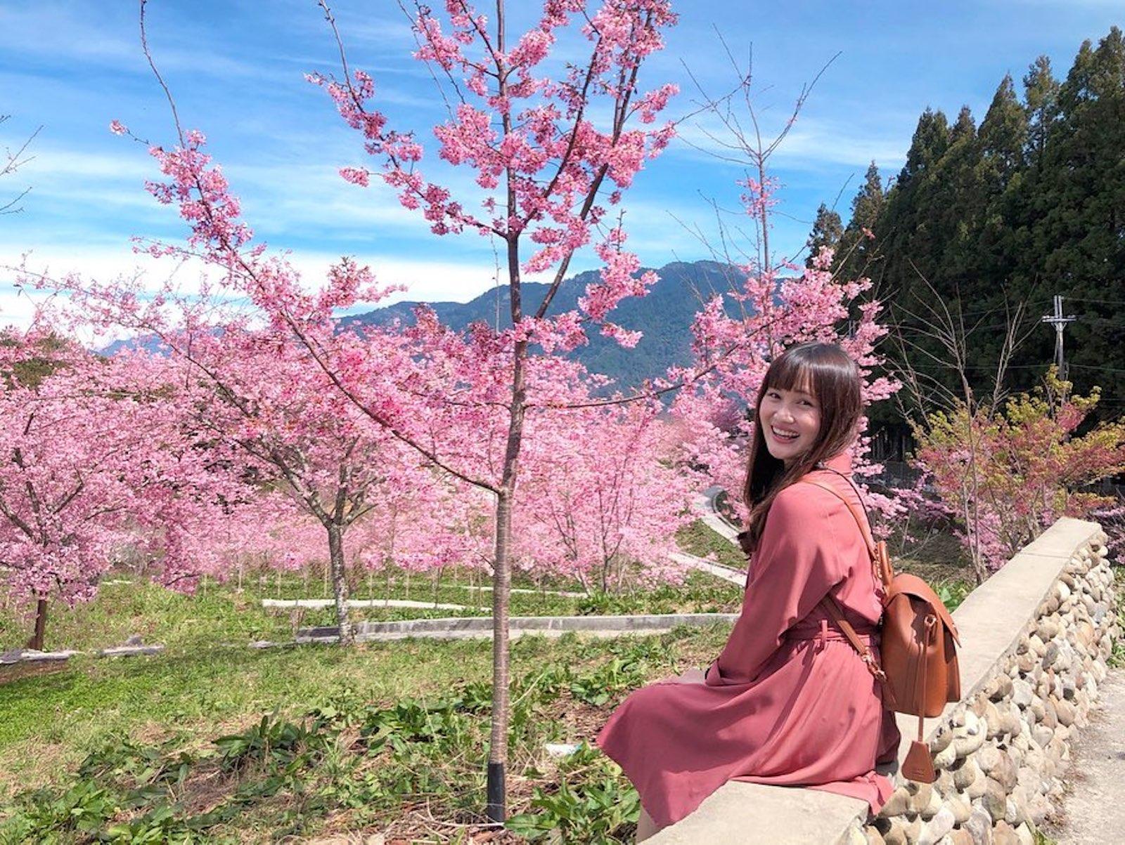 2021網紅9條賞櫻路線|櫻花季開跑,這些私房賞櫻景點不能錯過