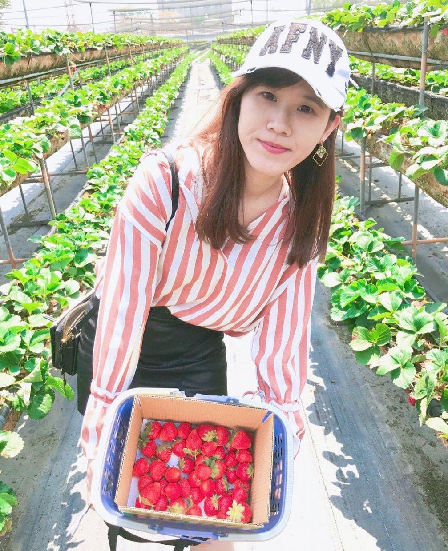 美裕草莓園 @lovepanda0116