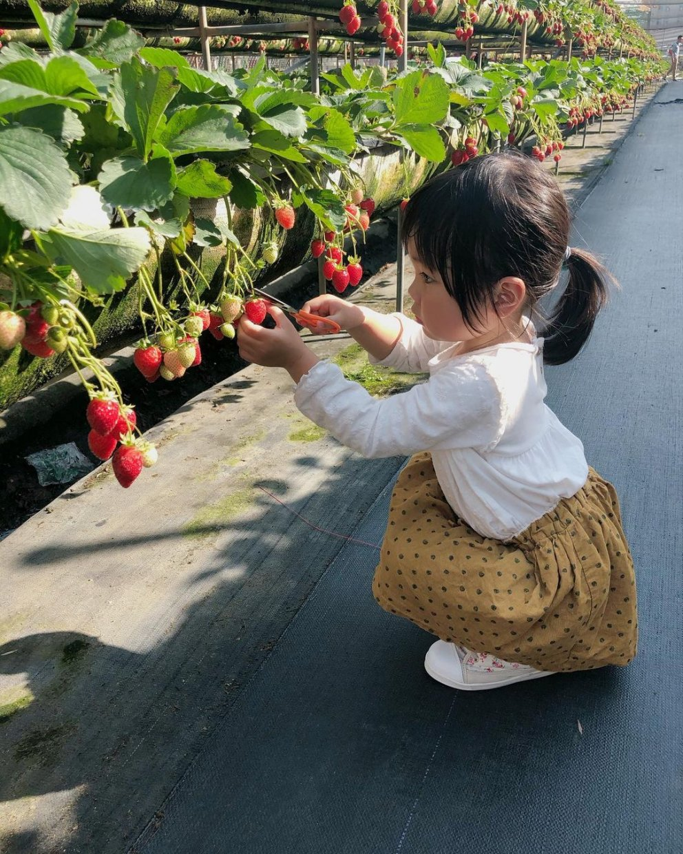 美裕草莓園 @baubausmile(1)