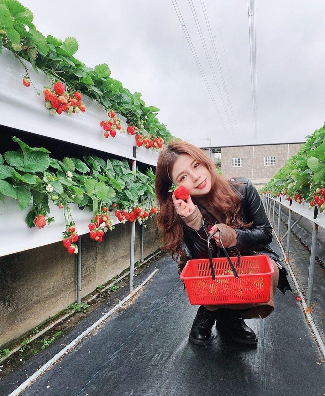 滿意牛奶蜜高架草莓園 @yayunlo