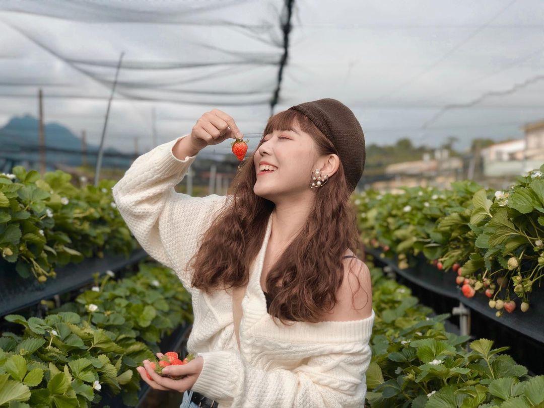 六合高架草莓園 @tingyun