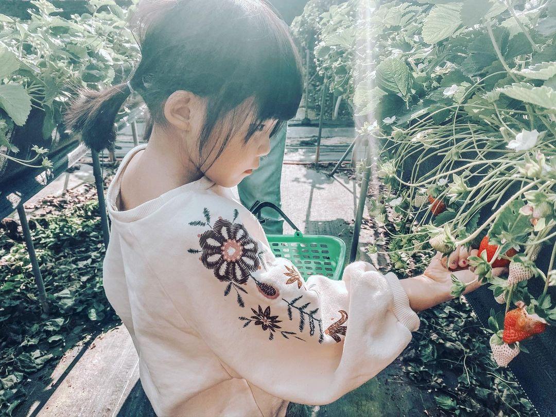 六合高架草莓園 @lin Y F