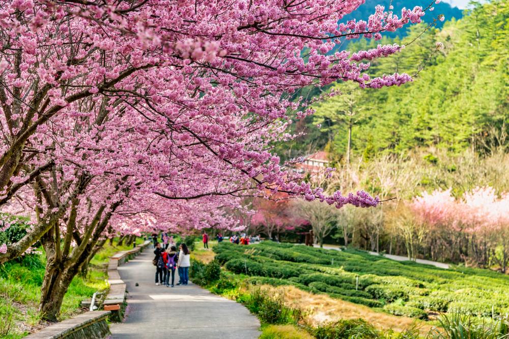 2021春節連假走春攻略|賞花、露營帶著家人全台玩透透!