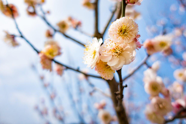 武陵農場(圖片來源:Shutterstock)3