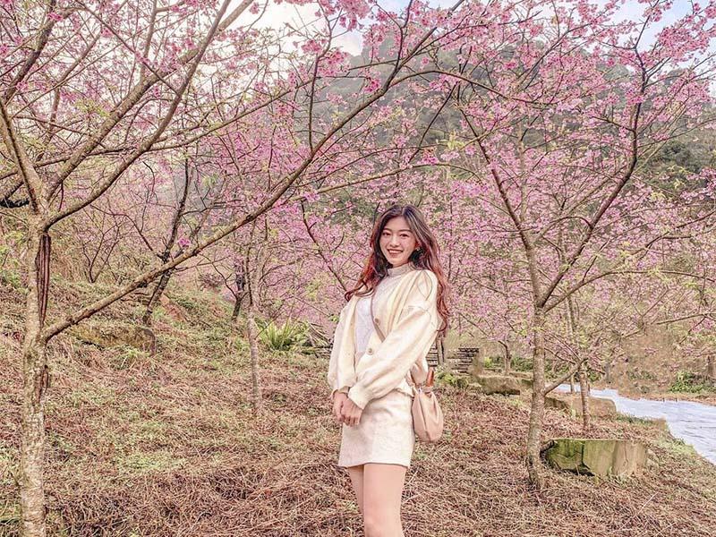 新北「三峽大熊櫻花林」迎接粉紅風暴!超夢幻場景不拍太可惜