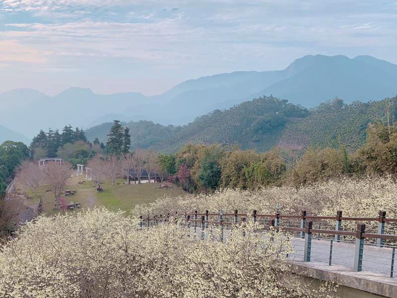 雪白神傳說之境「寒溪呢」,沐浴大自然的櫻花秘境!