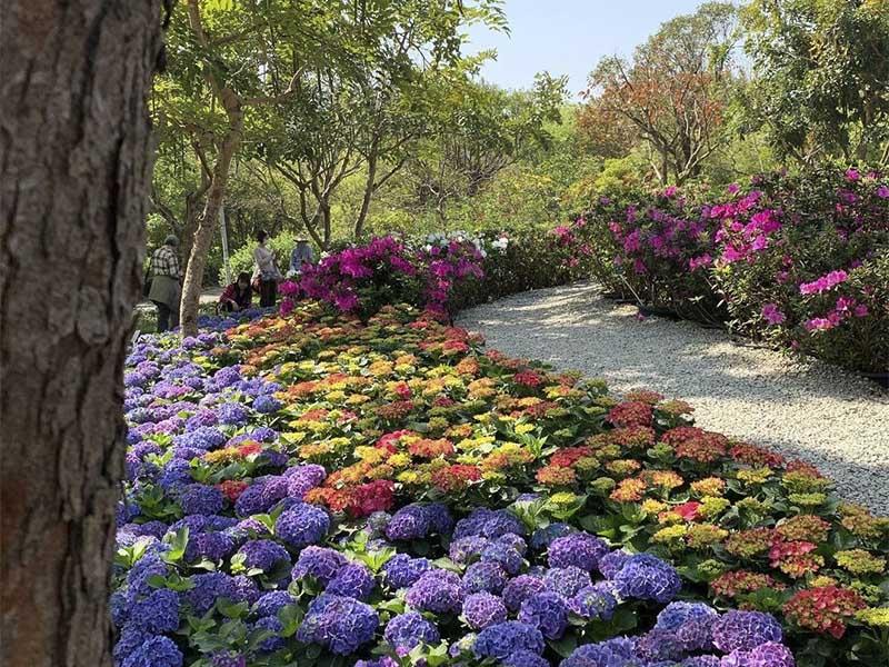 屬於愛花者的嘉年華!2021台北杜鵑花季就在大安森林公園!