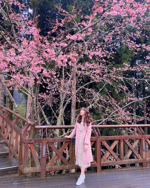 阿里山賞櫻住宿攻略|浪漫櫻花美景相伴 住宿玩樂兩不相誤