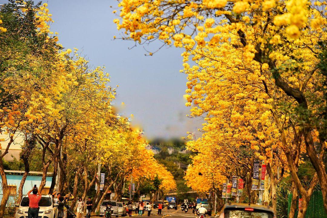 八掌溪黃金風鈴步道 @taiwan 4fun(2)