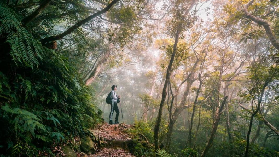 最屏東秘境步道大公開!6條屏東秘境路線 快來親近大自然吧