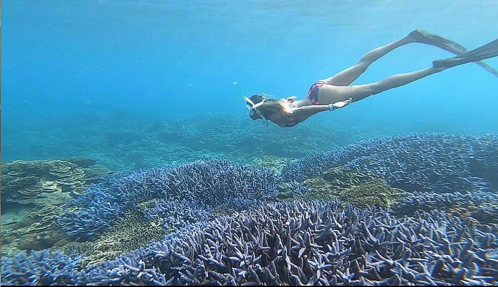 來去澎湖海底看薰衣草!澎湖浮潛潛水推薦,8個後悔沒早點發現的水上玩法