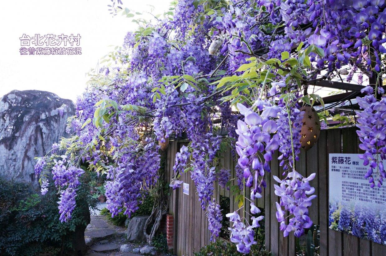 3、4月來追紫藤花|紫色風暴浪漫來襲~全台紫藤花景點告訴你