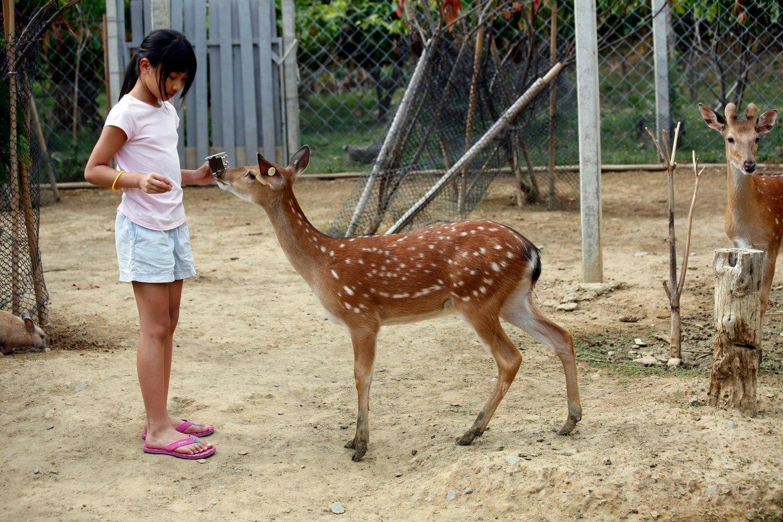 【圖二十】屏東-尋訪台灣梅花鹿