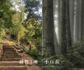 全台「小百岳」 新竹特輯:5座特色郊山推薦!拜訪山林間的古堡,從山頂眺望101