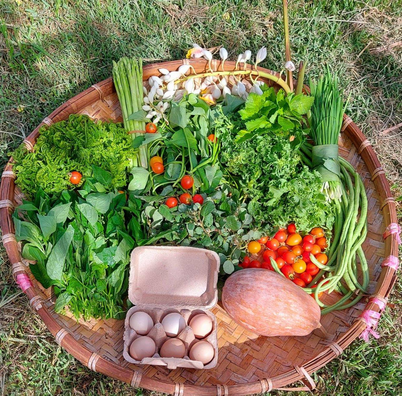 蔬菜箱實際出貨照