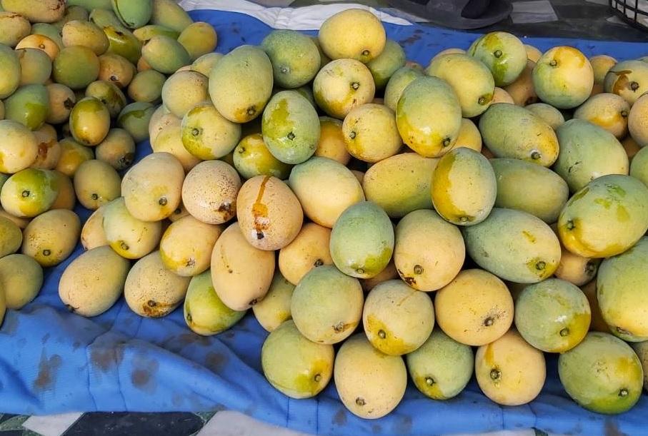 台灣常見的芒果品種-土芒果