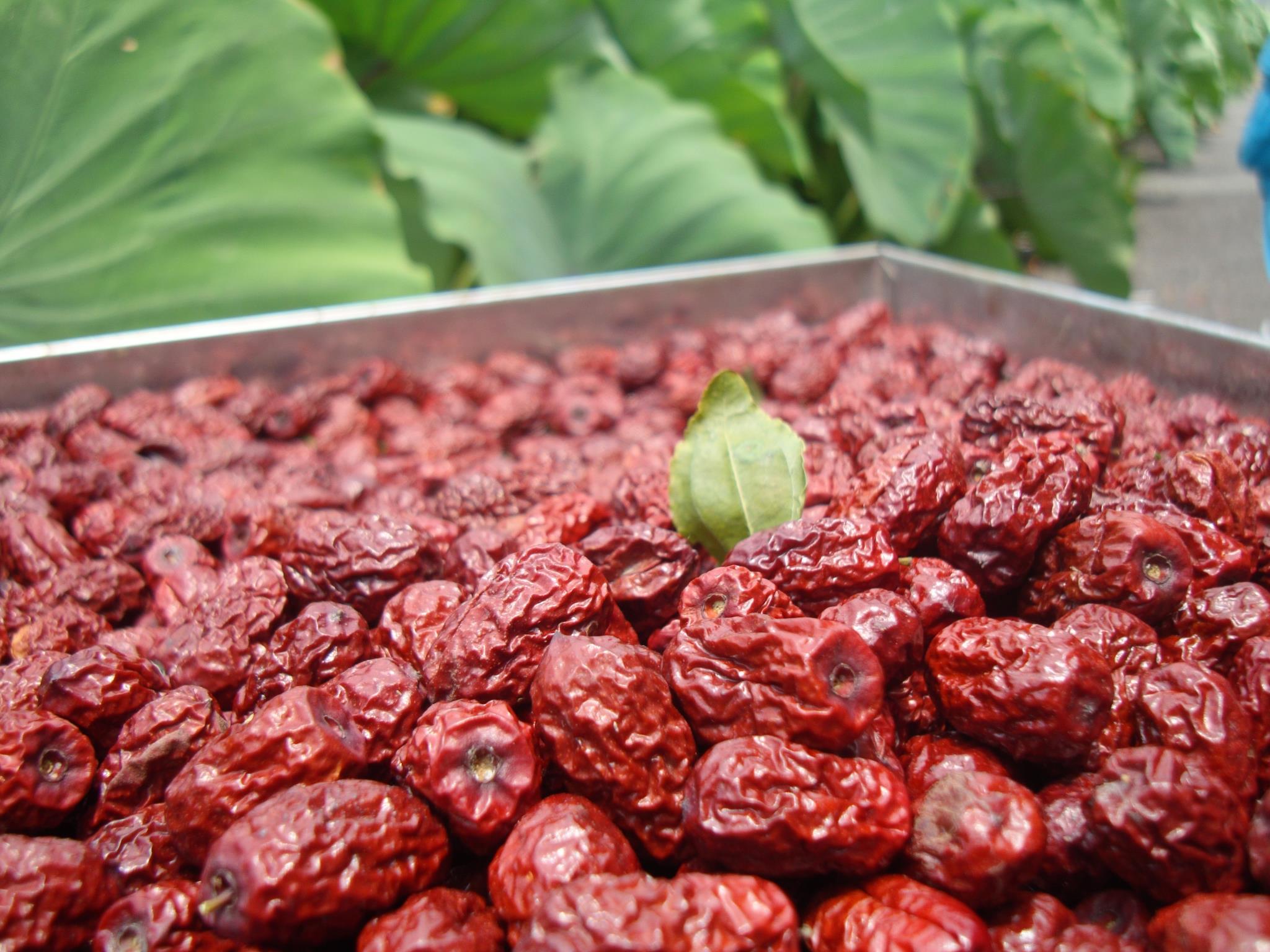 新鮮紅棗你吃過嗎?紅棗好處、挑選技巧、紅棗食譜一次告訴你!