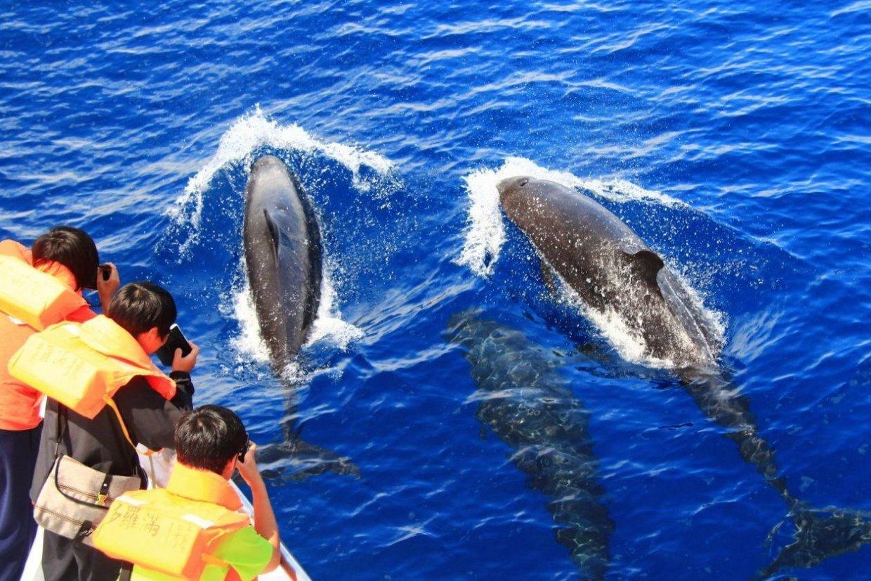 【行程】花蓮|賞鯨生態之旅 與鯨豚親密接觸 1