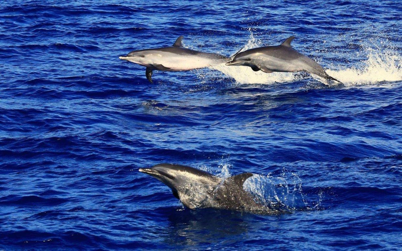 【行程】花蓮|賞鯨生態之旅 與鯨豚親密接觸 2