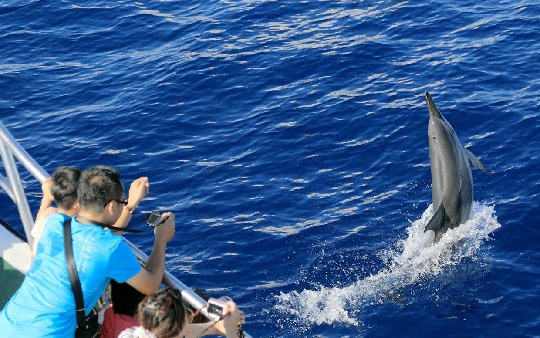 【行程】花蓮|海洋雙套票-花蓮賞鯨船 X 遠雄海洋公園