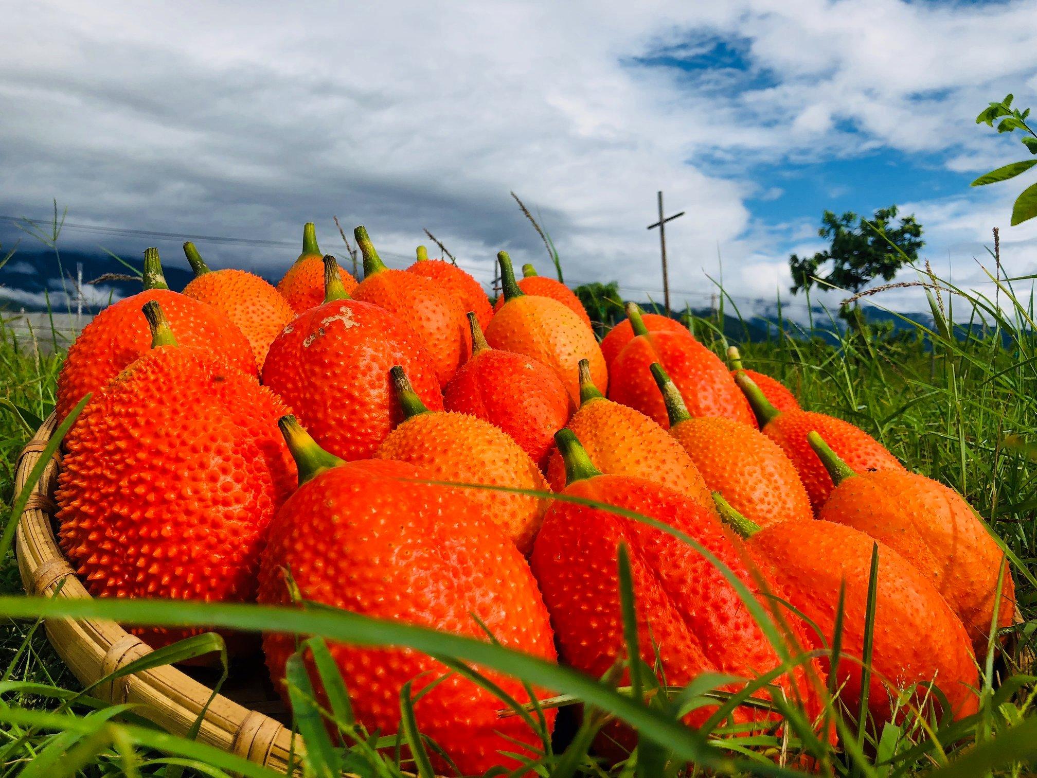 它叫木虌果,不是惡魔果實!天堂的營養聖品木虌果,這樣煮最好吃